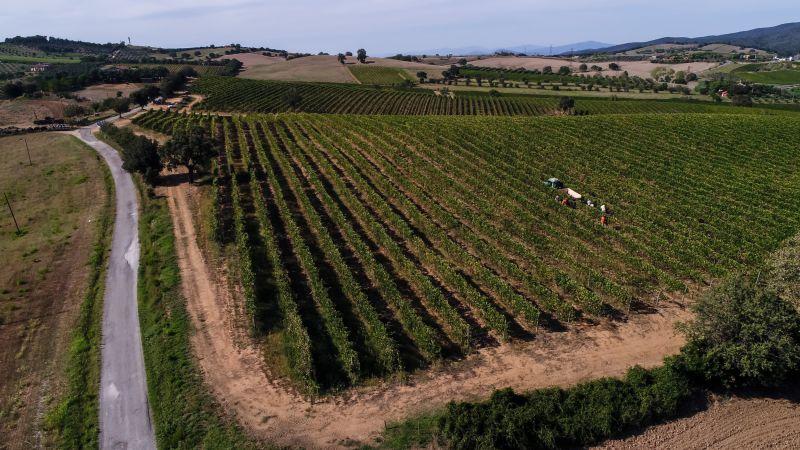 Soil, Tenute Calì - 4