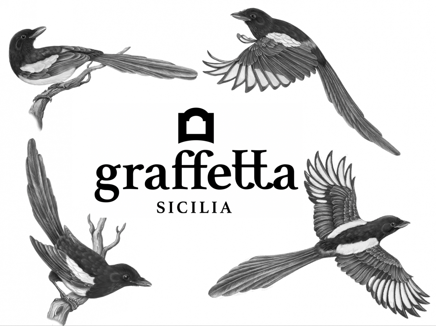 Nice article from Italy's Finest Wine about Graffetta