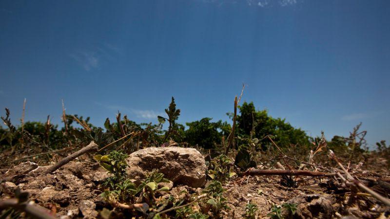 Soil, Tenute Calì - 6
